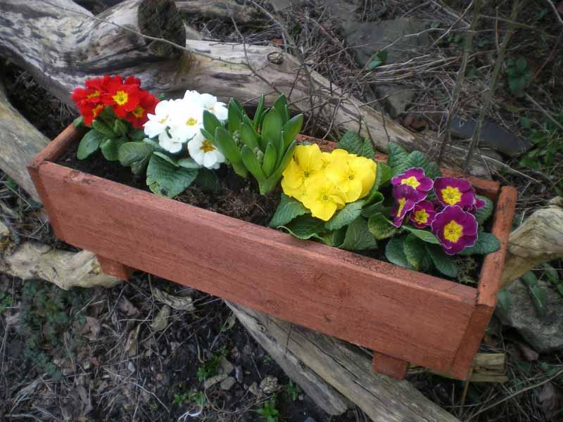 Medium planter and primroses