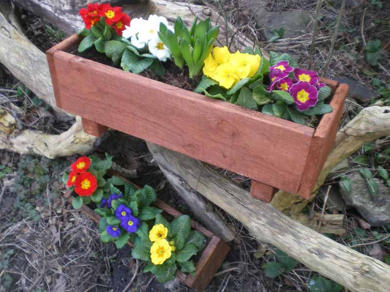 Planters and primroses